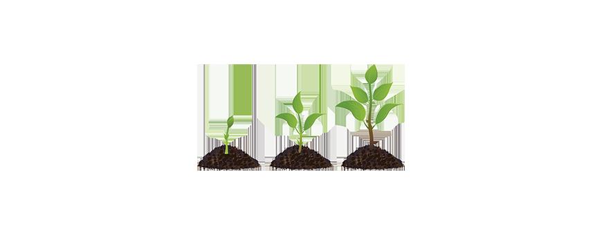Abono marihuana crecimiento venta online - El rincón del cultivador