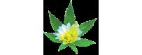 Abonos de marihuana floración venta online - El rincón del cultivador