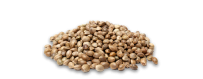 Semillas de marihuana a granel - El rincón del cultivador
