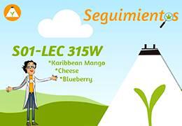 S01 - 01 Seguimiento Lec 315w - Karibbean Mango - Cheese - Blueberry.